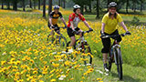 biking through a field of flowers
