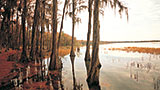Places-conecuh-florala-wetlands
