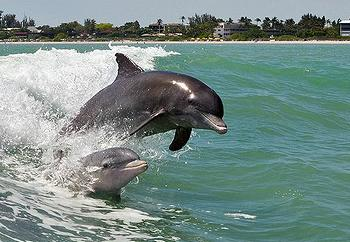 https://alabama-travel.s3.amazonaws.com/partners-uploads/photo/image/54efbd37f1db87a69100002e/dolphins_in_wave.jpg