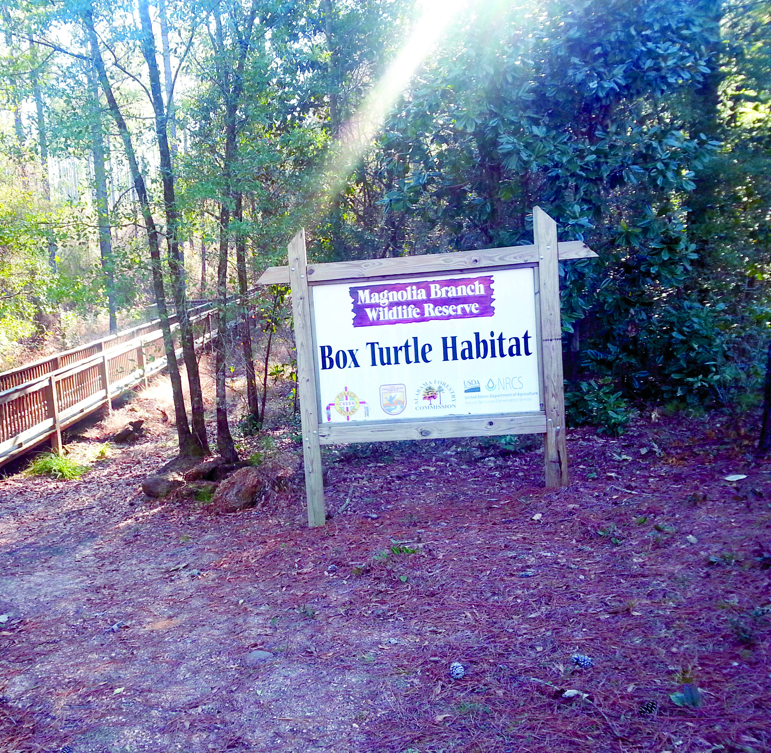 https://alabama-travel.s3.amazonaws.com/partners-uploads/photo/image/55351ed96a66c113880000d8/bo_turtle_habitat.jpg