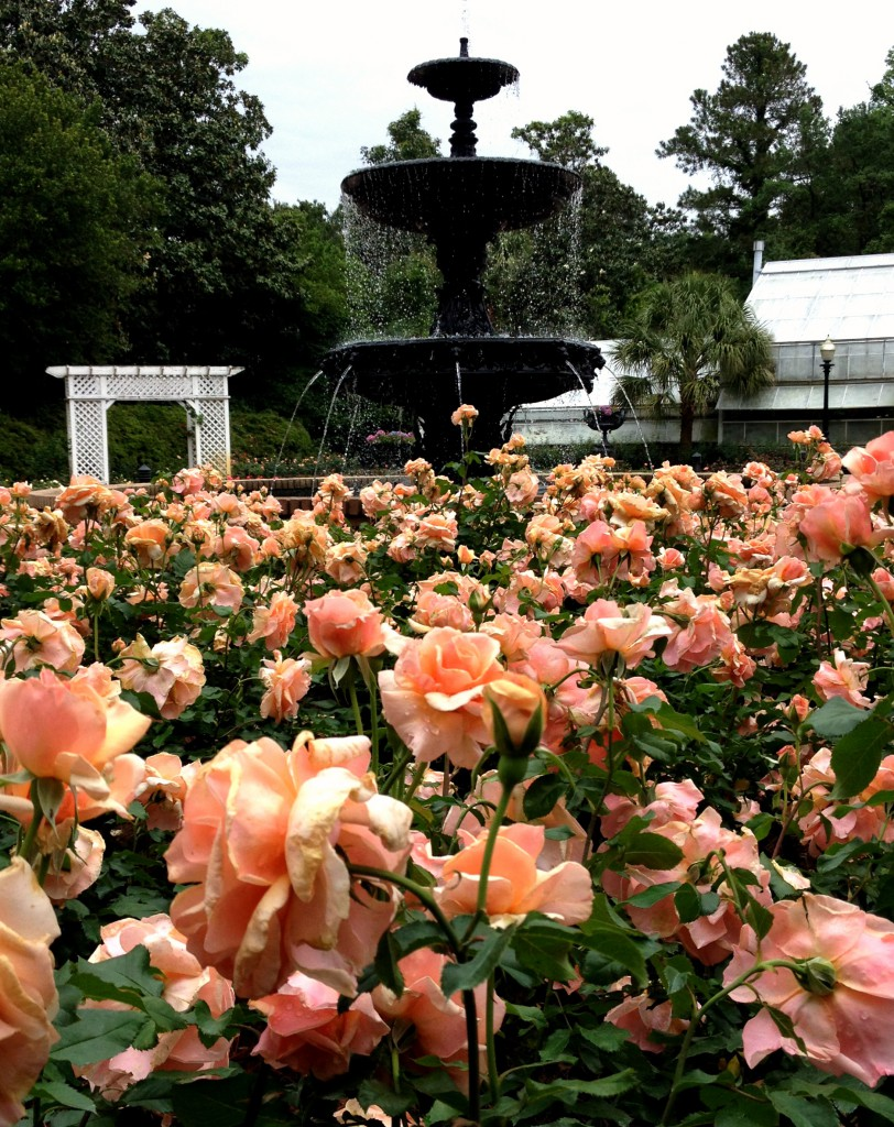 Rose Bloom Out at Bellingrath