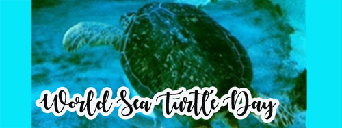 Slide_world_sea_turtle_day
