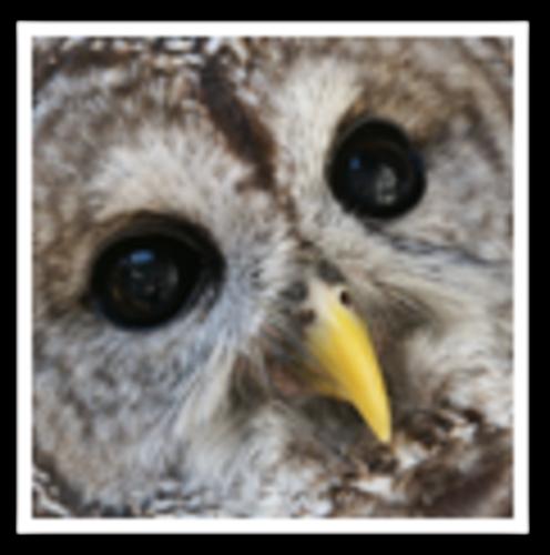 Slide_owl_thumbnail