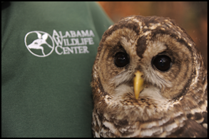 Alabama Wildlife Center's Owl-O-Ween