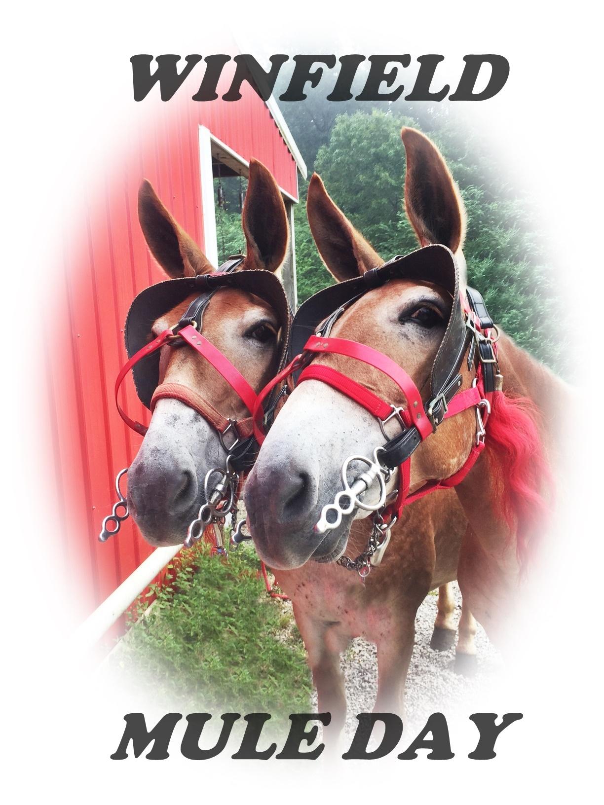 Winfield Mule Day