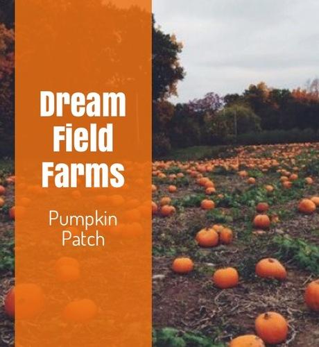 Slide_pumpkin_patch