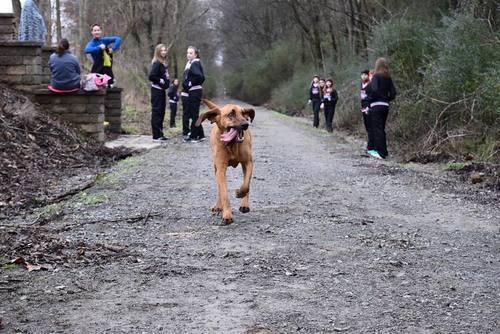 Slide_elkmont_hound_dog_half_ludivine