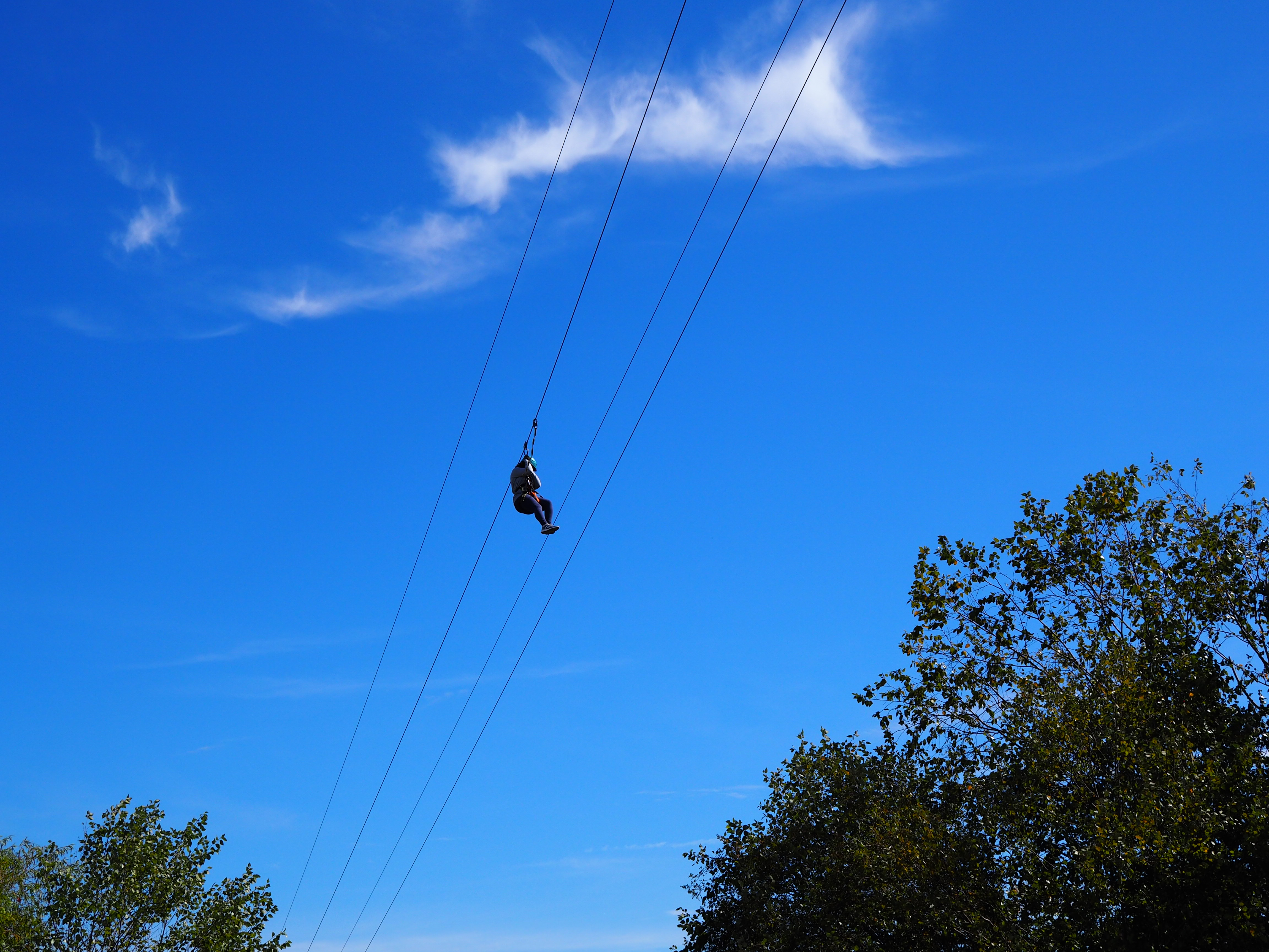 Blue Heron Adventure Zip Line & Aerial Course