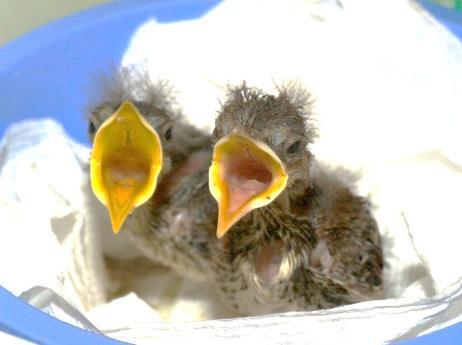 https://alabama-travel.s3.amazonaws.com/partners-uploads/photo/image/5f46c8b5fd8c950008fe9b11/BabyBird.jpg