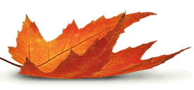 Picture of Autumn Leaf